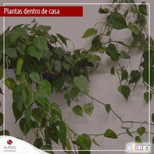 Aimportância das plantas dentro de casa